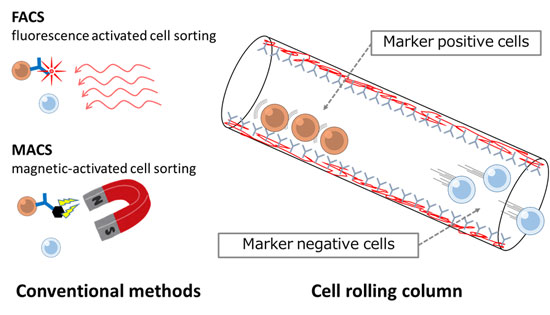 Fluorescence Activated Cell Sorting Method