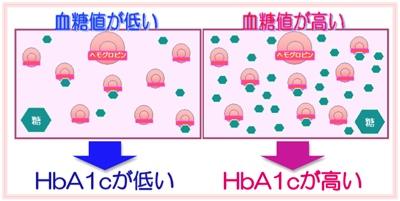 A1c と は ヘモグロビン
